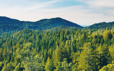 4 Reasons Why You Should Be Creating Evergreen Content