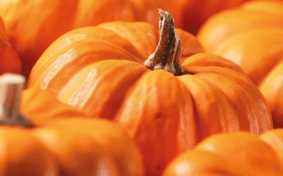 Alicja's Colour Of The Month – Pumpkin Orange!